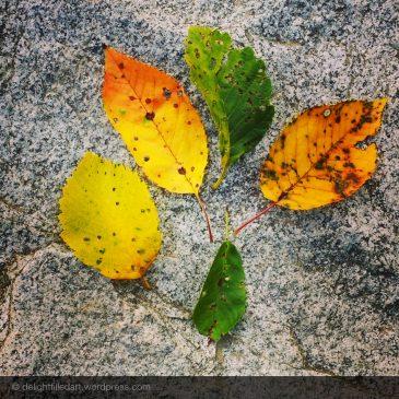 Still delighting in leaves